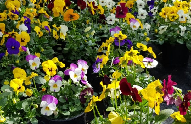 Frische Farben im Garten und Zuhause