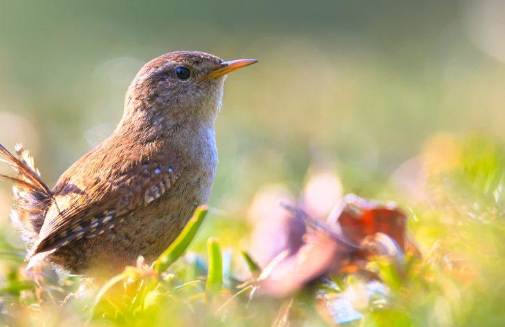 Vogelfreundlicher Garten Ratgeber