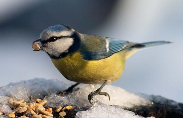 Vogelfutter in Gartencenter / Gärtnerei kaufen